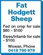 Fat Hodgett Sheep Fed on crop for sale $80 - $100 Ewes/inlamb for sale - $100. Wowan. Phone 0418 780 979