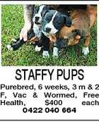 STAFFY PUPS Purebred, 6 weeks, 3 m &amp;amp; 2 F, Vac &amp;amp; Wormed, Free Health, $400 each 0422 040 664