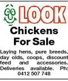 Chickens For Sale Laying hens, pure breeds, day olds, coops, discount feed and accessories. Deliveries available. Ph: 0412 507 748