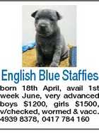English Blue Staffies born 18th April, avail 1st week June, very advanced boys $1200, girls $1500, v/checked, wormed & vacc. 4939 8378, 0417 784 160