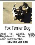 Fox Terrier Dog Age: 15 weeks, Male, Registered, Three, $250 each Toowoomba. M:0413 081 648