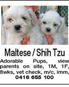 Maltese / Shih Tzu Adorable Pups, view parents on site, 1M, 1F, 8wks, vet check, m/c, imm, 0416 655 100