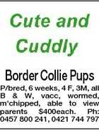 Border Collie Pups P/bred, 6 weeks, 4 F, 3M, all B & W, vacc, wormed, m'chipped, able to view parents $400each. Ph: 0457 800 241, 0421 744 797