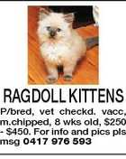 RAGDOLL KITTENS P/bred, vet checkd. vacc, m.chipped, 8 wks old, $250 - $450. For info and pics pls msg 0417 976 593