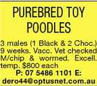 PUREBRED TOY POODLES 3 males (1 Black & 2 Choc.) 9 weeks. Vacc. Vet checked M/chip & wormed. Excell. temp. $800 each P: 07 5486 1101 E: dero44@optusnet.com.au