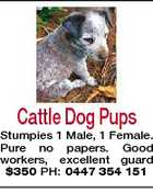Cattle Dog Pups Stumpies 1 Male, 1 Female. Pure no papers. Good workers, excellent guard $350 PH: 0447 354 151