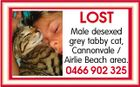 LOST Male desexed grey tabby cat, Cannonvale / Airlie Beach area. 0466 902 325