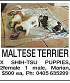 MALTESE TERRIER X SHIH-TSU PUPPIES, 2female 1 male, Marian, $500 ea, Ph: 0405 635299