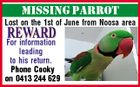 MISSING PARROT Lost on the 1st of June from Noosa area For information leading to his return. Phone Cooky on 0413 244 629