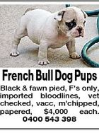 French Bull Dog Pups Black & fawn pied, F's only, imported bloodlines, vet checked, vacc, m'chipped, papered, $4,000 each. 0400 543 398