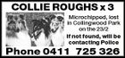 COLLIE ROUGHS x 3 Microchipped, lost in Collingwood Park on the 23/2 If not found, will be contacting Police Phone 0411 725 326