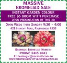 MASSIVE BROMELIAD SALE INSTANT GARDEN COLOUR FREE $5 BROM WITH PURCHASE UPON PRESENTATION OF THIS AD OPEN WEDS THRU SUNDAY 9:30 - 4:00 421 HUNCHY ROAD, PALMWOODS 4555 BROMAGIC BROMELIAD NURSERY PHONE 5445 0441 E: bromagic@ozemail.com.au www.bromeliads-of-australia.com.au