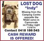 "LOST DOG ""Indy"" Missing from the Camping Centre opposite the Mobil servo in Cannonvale on Friday night 11/4/14 Contact 0418 186 543 CASH REWARD IS OFFERED!"