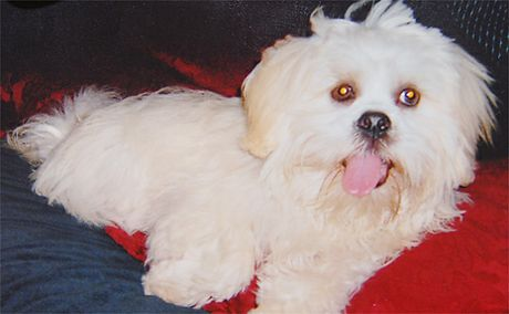 Friendly and only 15 months old, Apso was taped by its head and chest to a tree and died.  Blood in the dog's mouth will be tested for DNA.