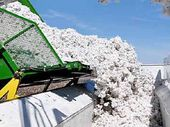A trailer bin empties cotton into the module builder.