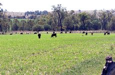 MORE PROTECTION NEEDED: Surat Basin farmers are worried that the State Government's Protecting Queensland's strategic cropping land policy framework aimed to protect farming land from the resources boom does not include grazing land.