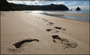  The Coromandel Peninsula is top of the list for Kiwis when it comes to holiday spots they want to visit this summer.