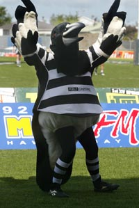 CREEPY KAHU: Magpies Mascot Up To No Good