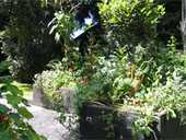 In 2011, our garden is going to be in the Kerikeri Garden Safari.