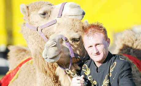 Camel trainer Rod Levy with Curley and Masai at the Bundaberg Showgrounds.