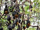 SUNSHINE Coast Council has voted in favor of moving the bats at Tepequar Dv, Maroochydore and Cassia Ave, Coolum.