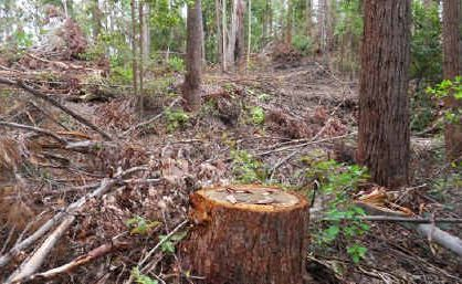 Coffs Harbour Hardwood Sales was found guilty of damaging a local nature reserve and damaging threatened species.