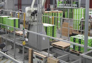 EastPack kiwifruit packhouse.