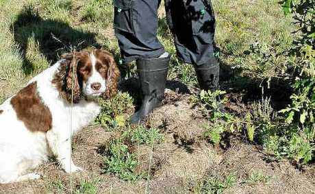 Tony Southgate with his trusty dog Cosmo inspects a potential truffle site.