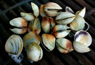 Shellfish collected in the Western Bay could be toxic.