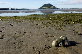 The paralytic shellfish poisoning toxin warning has been extended.