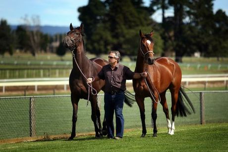 Horse Trainer Jim Pender with Casabella Lane (right) and Our Star Pupil (left).