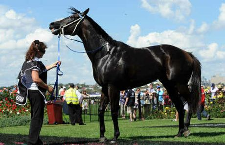 THE eyes of all Australian horse racing fans will be on Black Caviar at Royal Ascot.