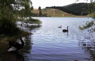 Swimmers are advised to stay clear of Lake Tutira