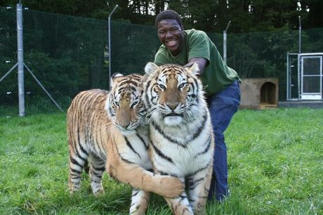 Keeper: Zion Wildlife Garden's big cat handler Dalu Mncube with tigers Kahli and Indira. Dalu was mauled to death by a 260kg rare white royal Bengal tiger called Abu as he cleaned its enclosure.