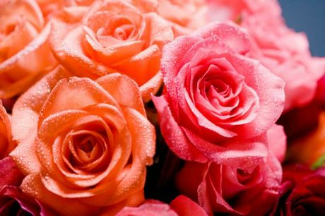 Roses will reward kind gardeners with bloom after bloom.