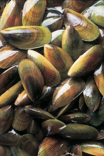 New Zealand Greenshell mussels