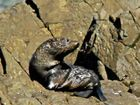 A PAIR of fur seal pups have been stealing hearts along the Byron coastline.