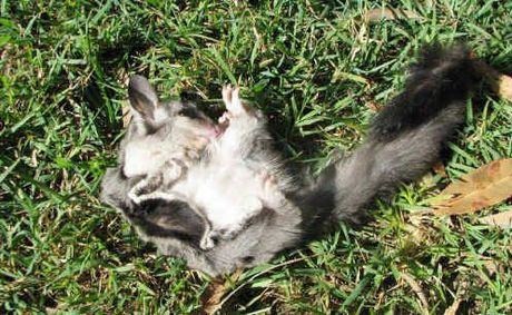 House Cats DESTROYING The Environment! FFC_22-09-2011_EGN_08_22envirocats_fct497x306_t460