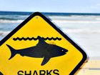 SURFERS and campers from Noosa to Inskip Point have been warned to keep an eye out for sharks, after repeated sightings close to shore near swimmers.