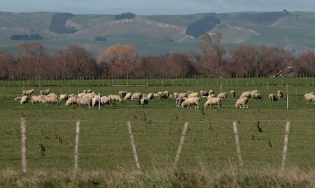 As a Federated Farmers member you can play an active role in New Zealand's most successful advocacy organisation for pastoral farming.