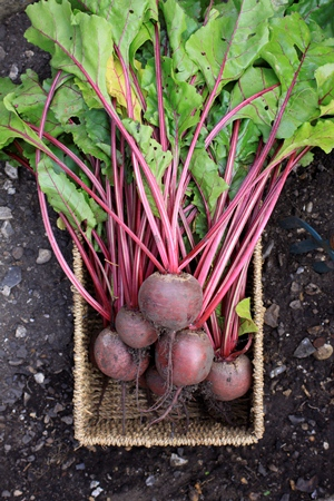 Beetroot might be an often unappreciated everyday vegetable in New Zealand but in some countries it is a key ingredient in signature dishes.