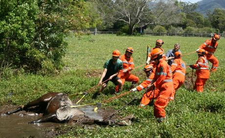 HEAVY LIFTING: Coffs Harbour SES crews pull Harriet the horse from a real spot of bother at Bonville.