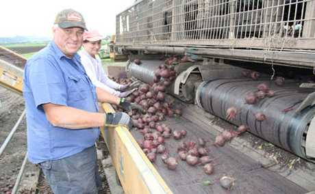 DOWN, NOT BEATEN: Beetrot farmer Peter Lerch works on his final load for the season.