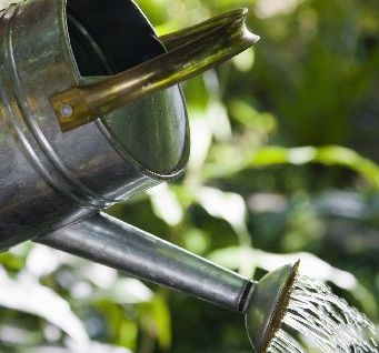 YOUR CHOICE: Old watering cans are among the easiest items to find in junk shops and garage sales.