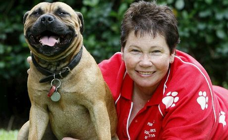 Ipswich Pet Minding Service founder Deb Taylor with Jasper, the staffy.
