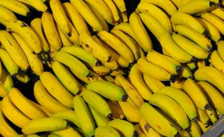Bundaberg banana crops have been found to be clear of bunchy top disease.