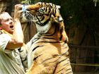 Australia Zoo handler Giles Clark plays with Charlie, a fully grown tiger, at the Tiger Temple.