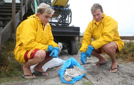 Lifeguards Ben Johnston and Seth Merrett collect lamb roasts washing up on Papamoa Beach