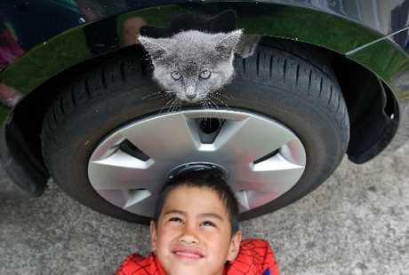 HANGING: Airtrek the kitten pictured with new owner Titan Wiringi, 5, was eventually found clinging to the inside hub of a wheel on a Mitsubishi Airtrek belonging to Rotorua's Ashley Chand. PHOTO/STEPHEN PARKER 050112SP