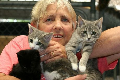 Volunteer Mandy Smith shows off some of the latest kittens left with Hamilton SPCA for care and possible rehoming.